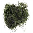 Dschungelmoos, grün, SB-Btl. 20 g